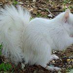 19-animales-albinos-ardilla-01
